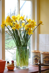 backlit daffodils in a family kitchen