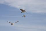 seagulls in flight 2 poster