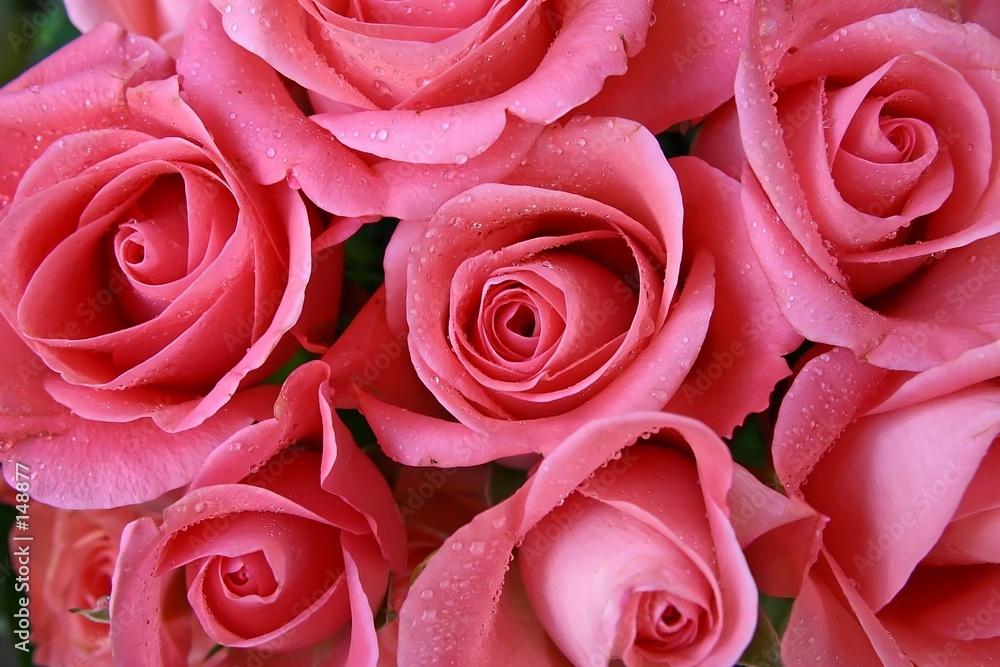 kwiat kwiat flora - powiększenie