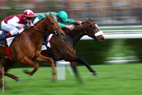 chevaux de course - 149244