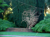 spider web without the spider poster