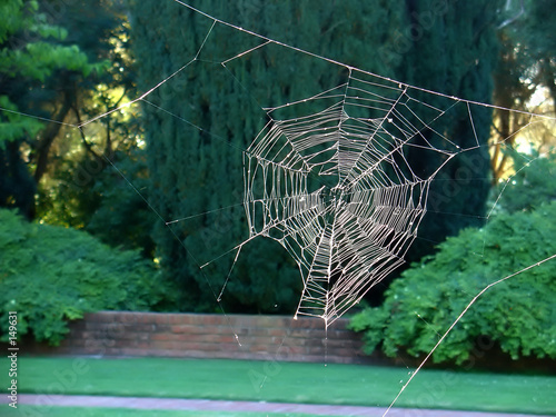spider web without the spider