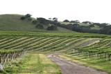 vineyard 2 poster