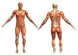 anatomie člověka # 4