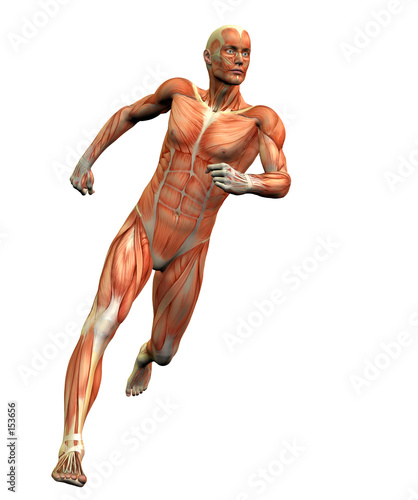 anatomy man 3