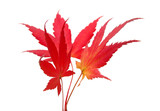 three maple leaves poster