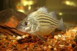 fish tank poster