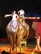 éléphant au cirque 5