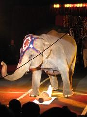 éléphant au cirque 22
