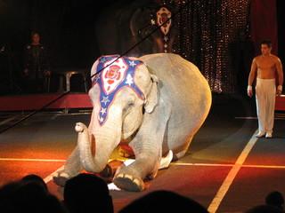 éléphant au cirque 24
