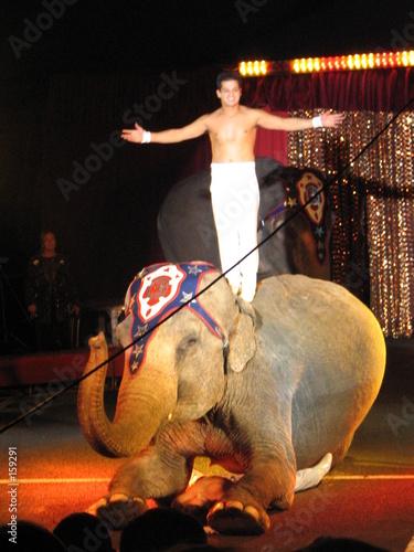 éléphant au cirque 26