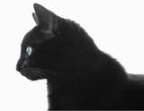 black cat profile over white poster