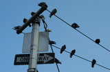 electric poles n birds poster