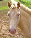 closeup white horse poster