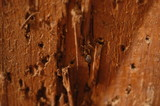 wooden closeup poster