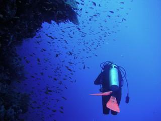 diver below reef