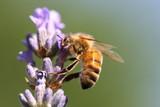 Fototapety bee good
