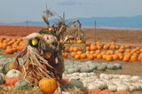 scarecrow in a pumpkin patch poster