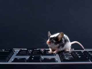 keybord and mouse
