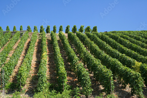 vineyard slope