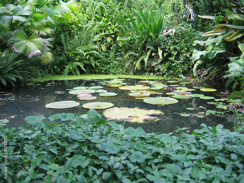 tropical water garden