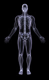 full figure xray - adult male poster