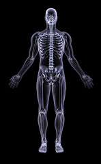 full figure xray - adult male