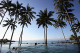 coconut trees & swimming pool poster