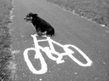 dog on a bike poster