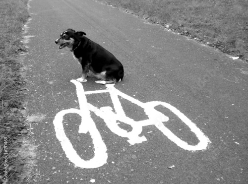 poster of dog on a bike