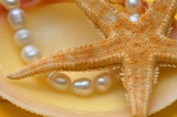 pearls and sea shell poster
