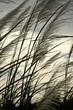 roleta: grass in the wind