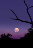 purple moon rise