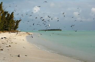 rodrigues island #16