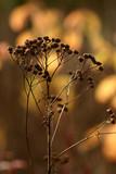 autumn plant poster