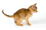 kitten; poster