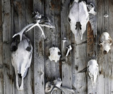 skulls on the wall poster