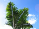 palm tree leaves poster