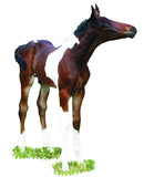 isolated tobiano foal poster