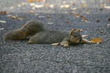 flat squirrel poster