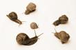 snail conflict