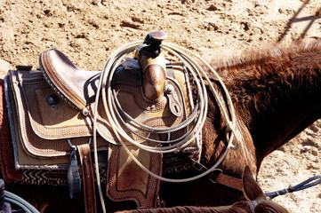 roping horse