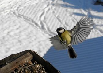 vogel im landeanflug mit winterlandschaft