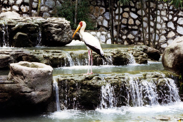 stork on a waterfall