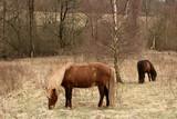 danish horses poster