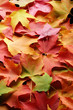 multicolored leaves 3