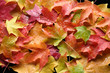 multicolored leaves 4