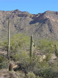 saguaro mountains