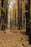 yellow autumn path poster
