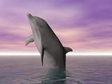 breeching dolphin poster